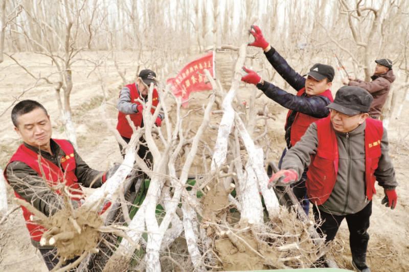 """且末县:""""红马甲""""帮村民移栽枣树"""