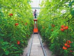 乌拉特前旗:扶贫产业园解决贫困户就业,促进农民增收