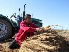 陕西靖边县机械化农业生产,加快村民致富