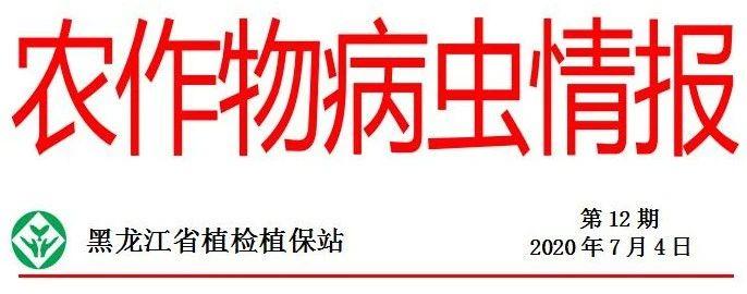 黑龙江省发布水稻二化螟发生趋势预报,这些地区注意预防!