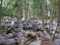 三义乡打造乡村脱贫养殖产业