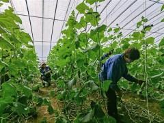 河北省滦州市扶贫产业有成效