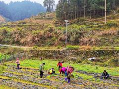 桂林灌阳镇中药产业助脱贫