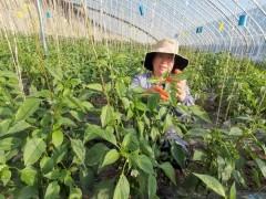 """甘州区打造四季常绿精品""""菜篮子""""产业"""