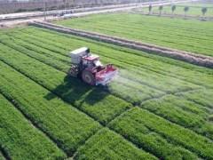 山东莱西:科技改变农业发展方向