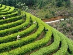 广西省:特色产业促增收