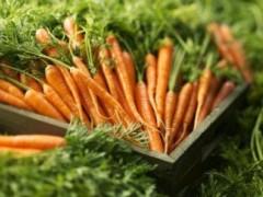 河北:龙尧胡萝卜有机种植 销往海外