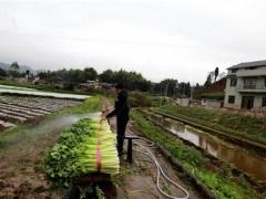"""大足成为重庆主城的""""菜篮子"""" """"绿色产业""""带动农户致富"""