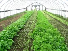 宁县:大棚设施农业有发展 合作社模式促新收