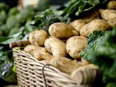 桂林四塘:冬种马铃薯实验走新路 敲开致富门
