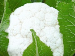 云南施甸:小小菜花 组成富民大产业