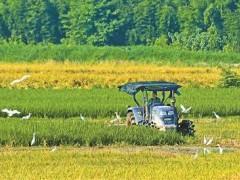 春耕贷款助力种粮大户保农资,促生产