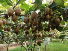 陕西:科学技术促进果业转型升级