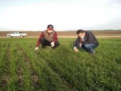 """杞县:农业专家地头""""手把手、面对面""""教农小麦病虫害防治"""