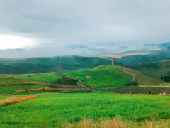 金川区:全面优化农业生产布局,助力乡村振兴