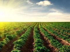 """科技专家组队为农民提供全面帮助,助力农业生产""""更上一层楼"""""""