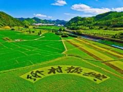 杭州:加大农村资金、人才输送,全面推动乡村振兴