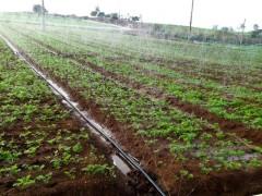 """山丹县位奇镇:""""水肥一体""""化助力农业生产更绿色、高质量化"""