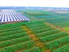 库伦旗:加大投资、建设,做优做强特色农业产业