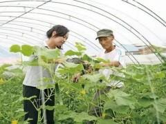 广东港青开启农业创业,找出大湾区农业致富新出路