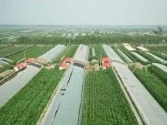 胜堡村:设施农业成村民致富的支柱