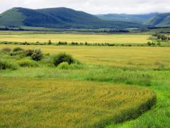 辛集市:麦田测查每亩高达784.2公斤,确保粮食安全