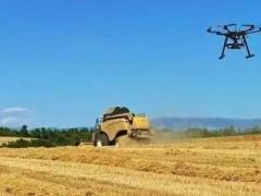 麦收进行时!安徽选育小麦品种单产创新记录