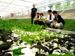 阳谷县:开展技术培训,提升农业服水平,助力夏粮丰产丰收