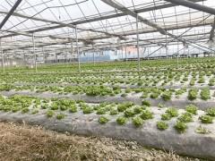 金塔县:加强制种瓜菜检疫,保障瓜菜质量安全生产