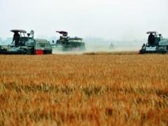 天津继续加强粮食生产能力建设,确保农业更稳产增收