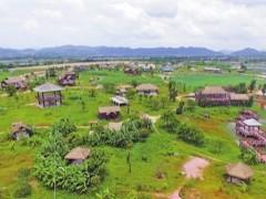 扶风县:深耕特色农业,为乡村振兴注入活力