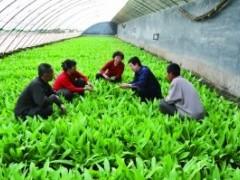 江苏泰兴加强农技培训,提升整体农户素养,助力农业生产更高质量