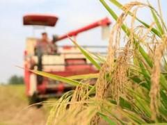 农业农村部在京启动金秋丰收节消费季,带动农业经济增长!