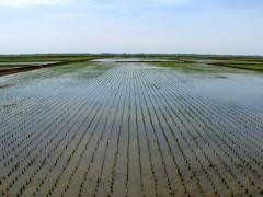 普阳农场多措并举助力农业生产改革创新,促进农业更提质增效!