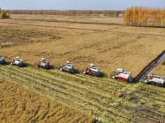 北大荒洪河农场有限公司分时分段抢收水稻,确保秋季大丰收!