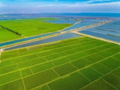 """上海欢庆农民丰收节:绿色数字农业尽显上海农业""""本色"""",发展智慧农业"""