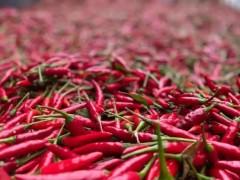 内蒙古通辽市开鲁县60万亩红辣椒获丰收,并走红全国