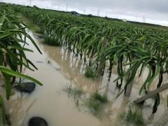 山西遇涝灾,积极加快减损工作,确保秋季农作物都能丰收!