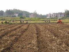 安乡县开展油菜耕播一体化,强化农机应用,推动农业更现代化发展
