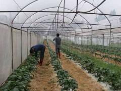 泉港多措并举为有序开展农业生产做铺垫!